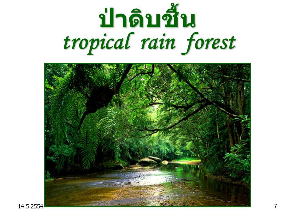 ป่าดิบชื้น tropical rain forest