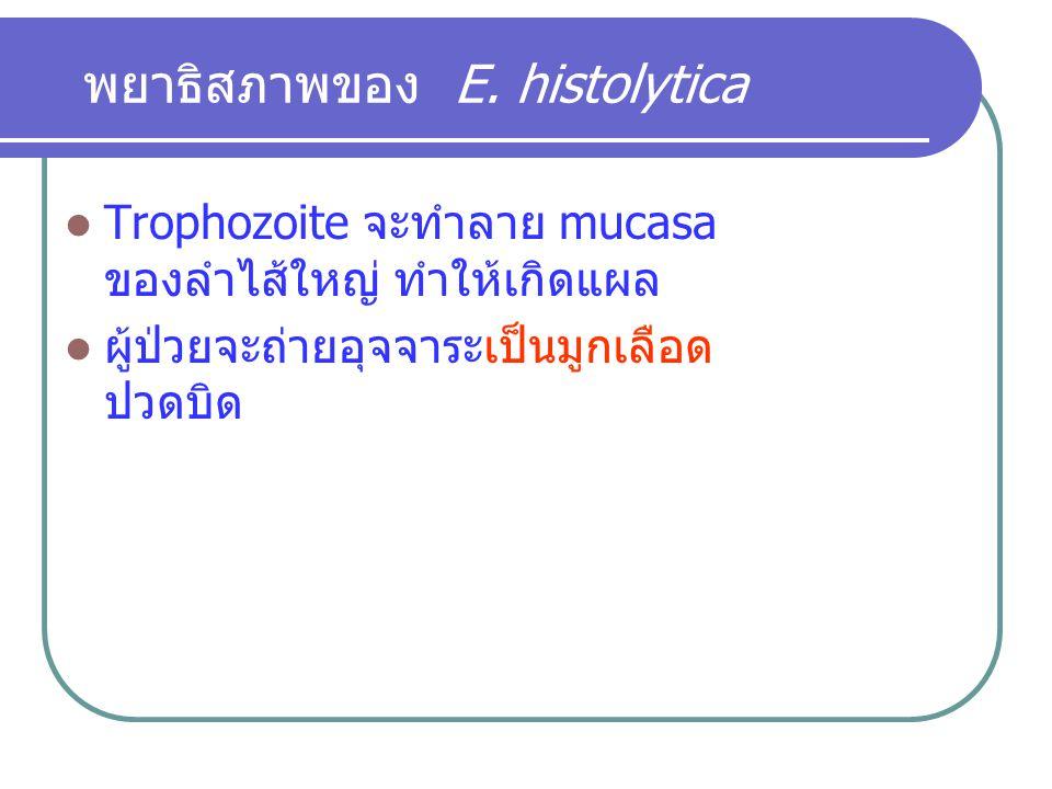 พยาธิสภาพของ E. histolytica