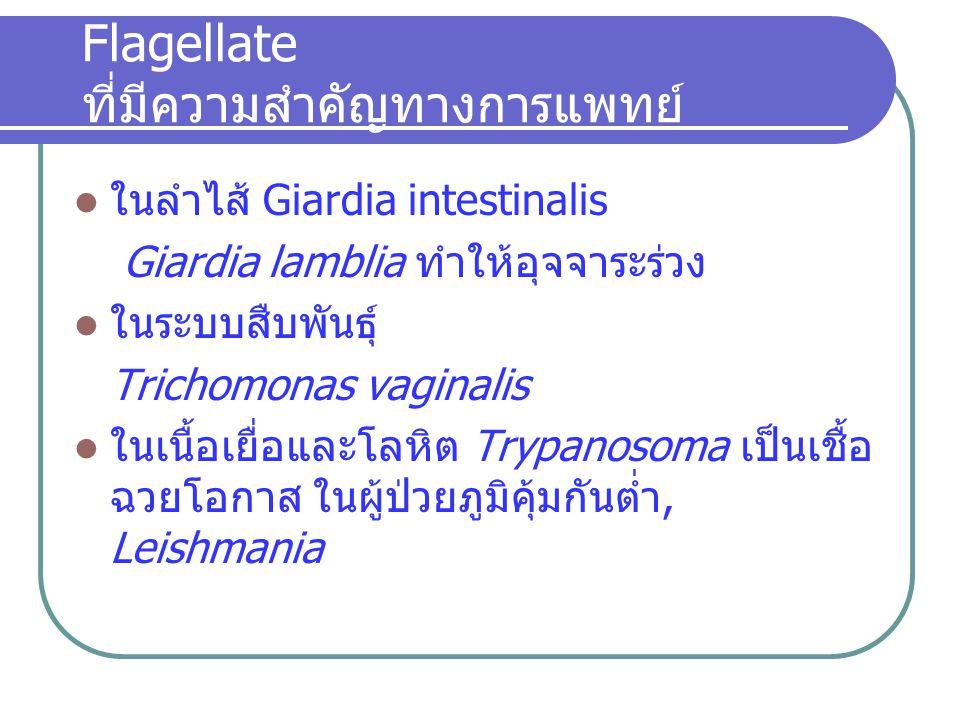 Flagellate ที่มีความสำคัญทางการแพทย์