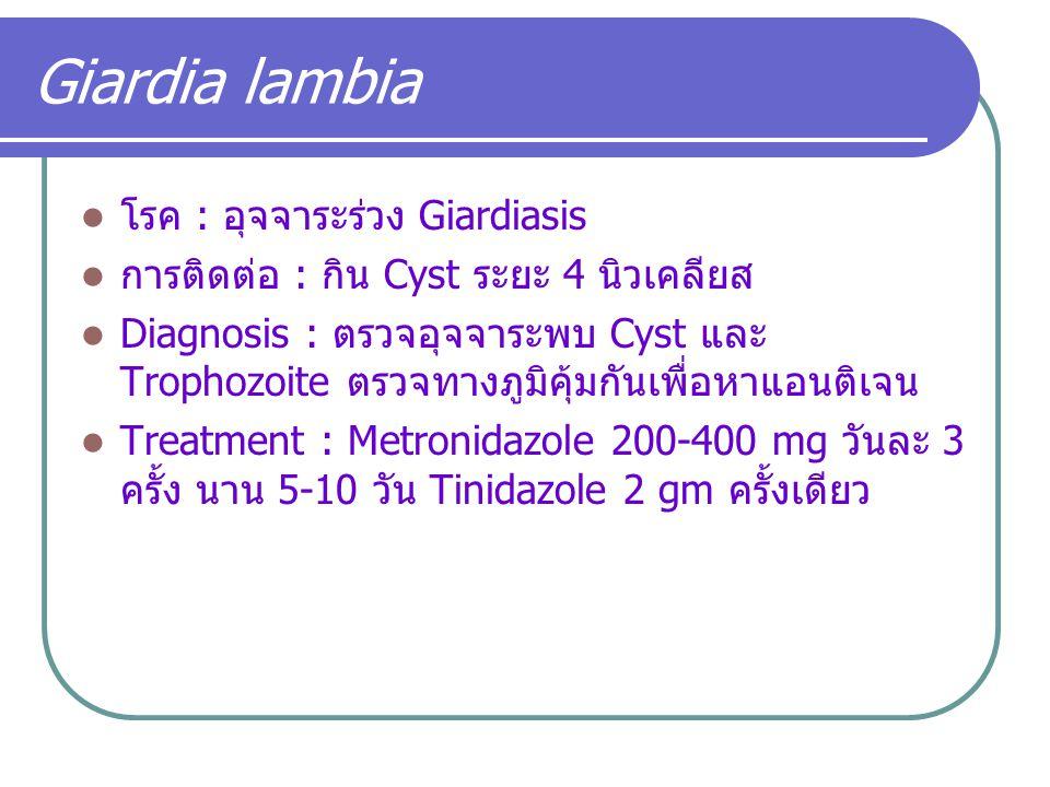 Giardia lambia โรค : อุจจาระร่วง Giardiasis