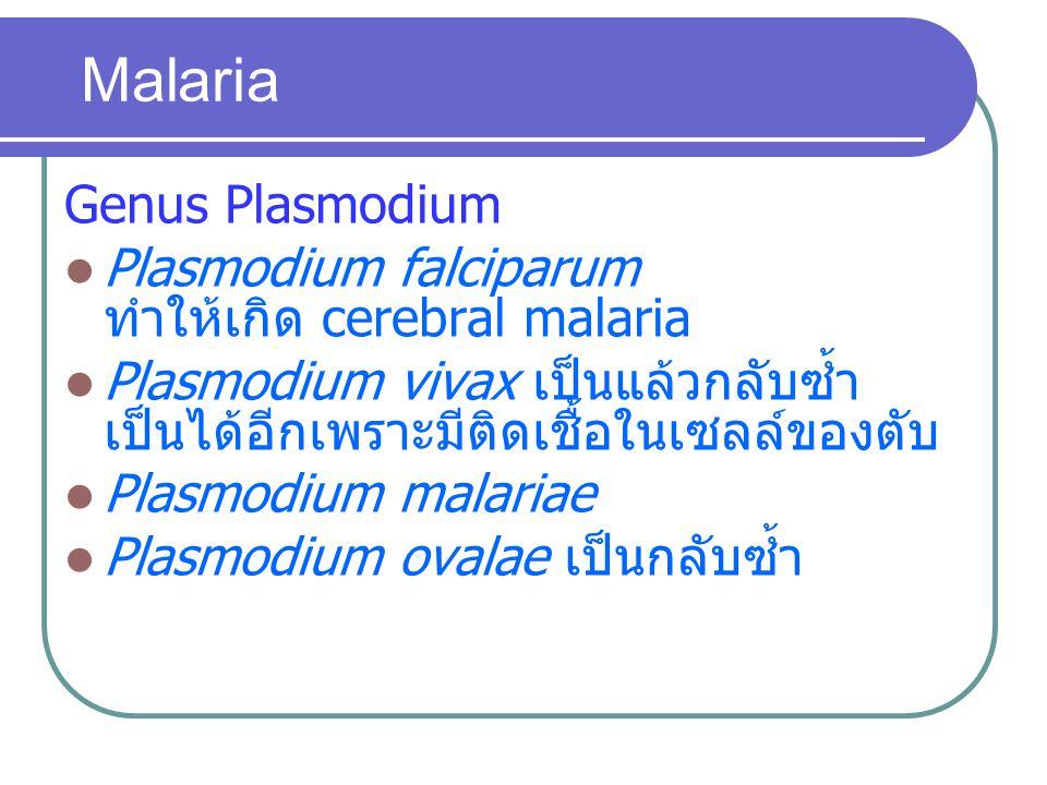 Malaria Genus Plasmodium