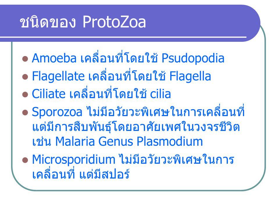 ชนิดของ ProtoZoa Amoeba เคลื่อนที่โดยใช้ Psudopodia