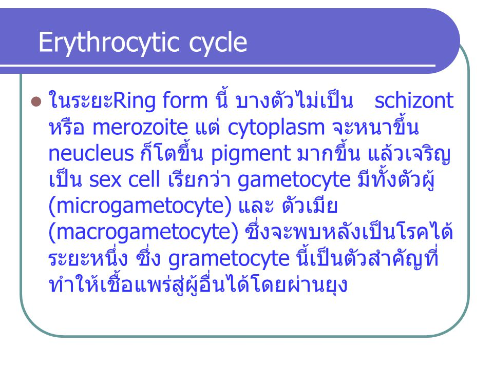 Erythrocytic cycle