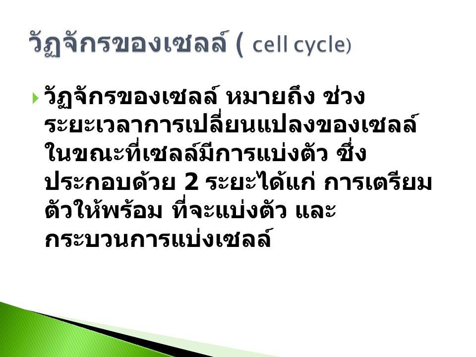 วัฏจักรของเซลล์ ( cell cycle)