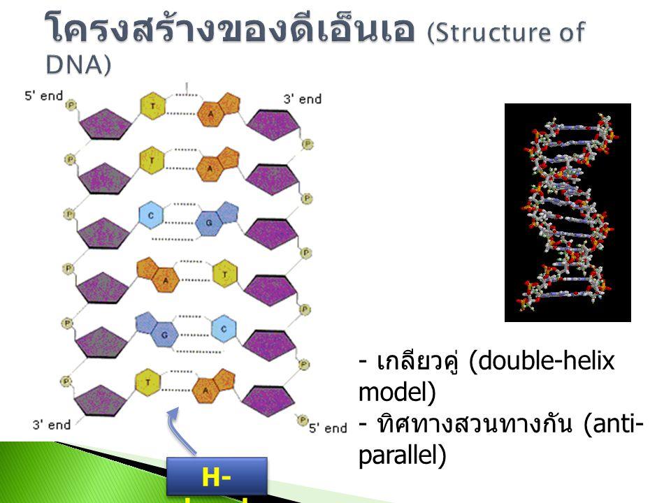 โครงสร้างของดีเอ็นเอ (Structure of DNA)