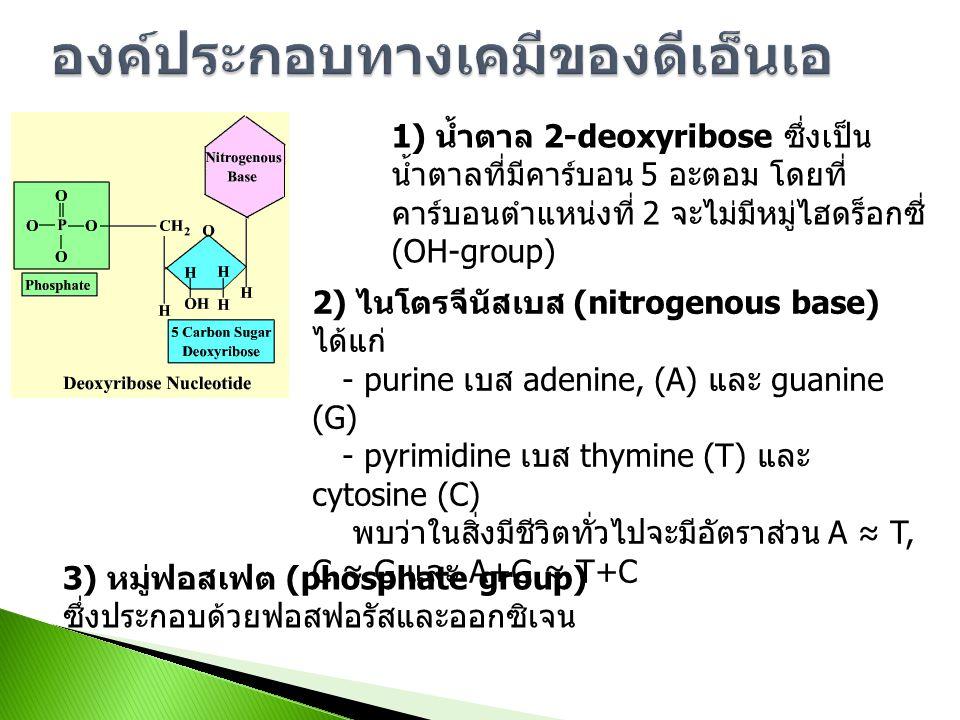 องค์ประกอบทางเคมีของดีเอ็นเอ