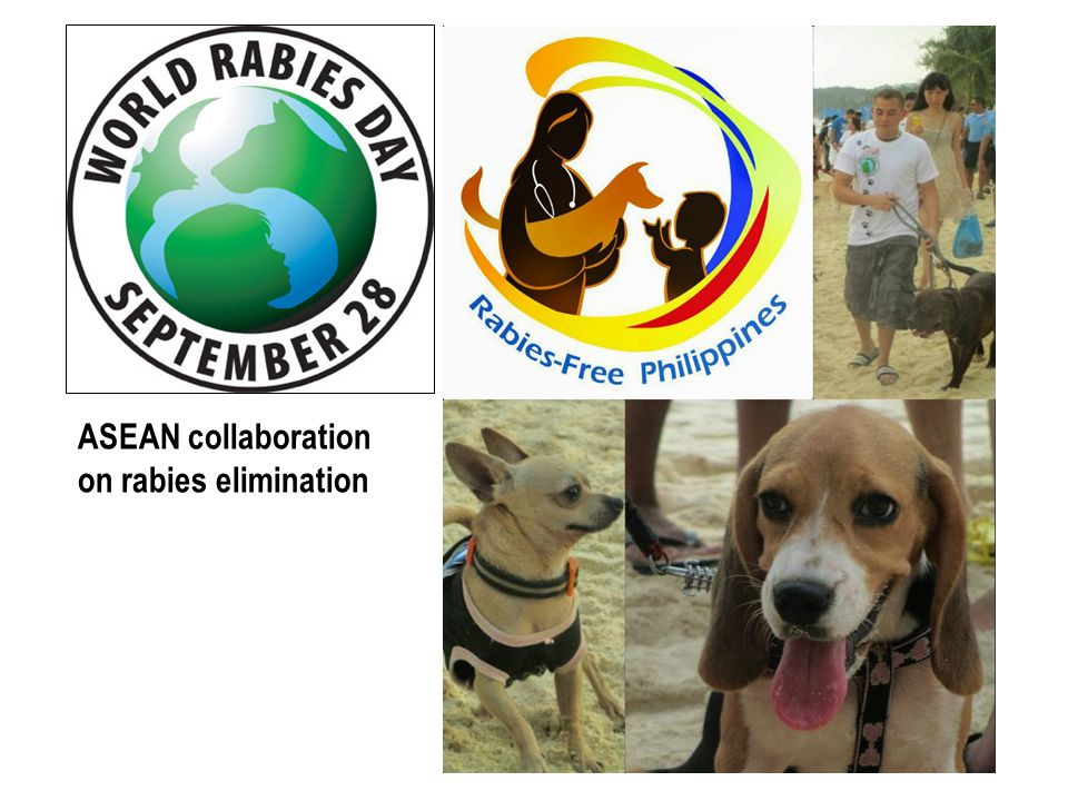 ASEAN collaboration on rabies elimination