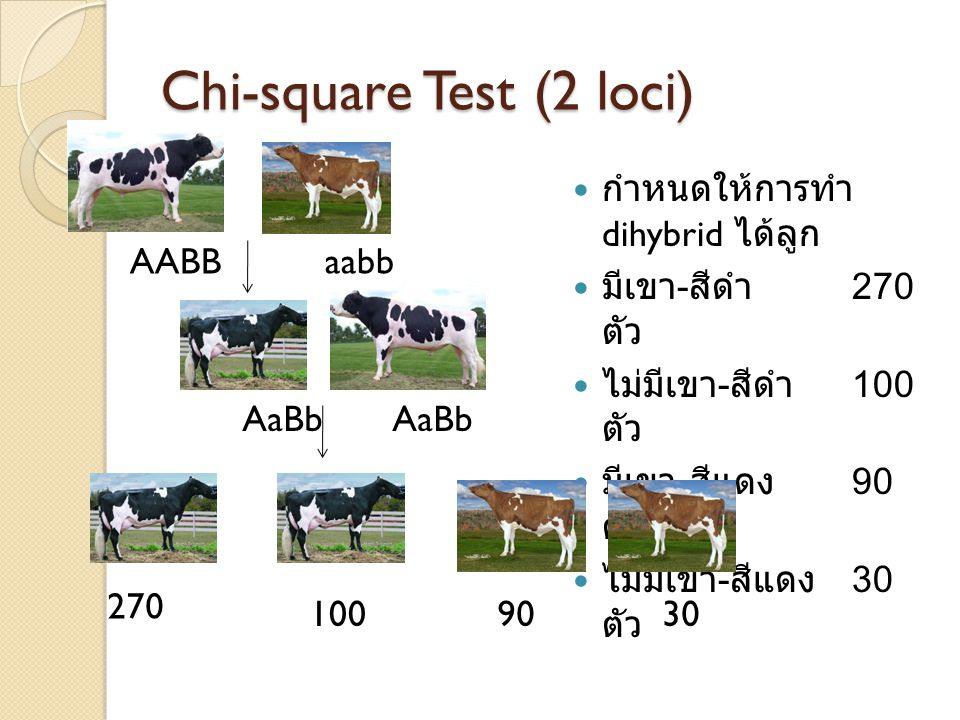 Chi-square Test (2 loci)