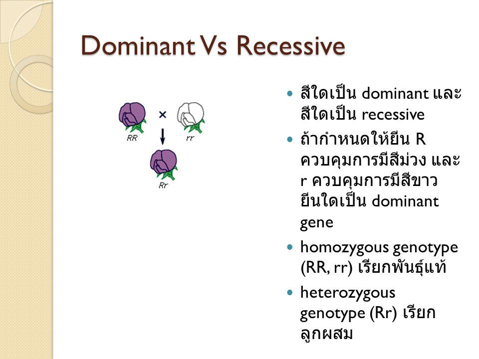 Dominant Vs Recessive สีใดเป็น dominant และสีใด เป็น recessive
