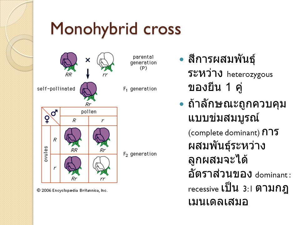 Monohybrid cross สีการผสมพันธุ์ระหว่าง heterozygous ของยีน 1 คู่