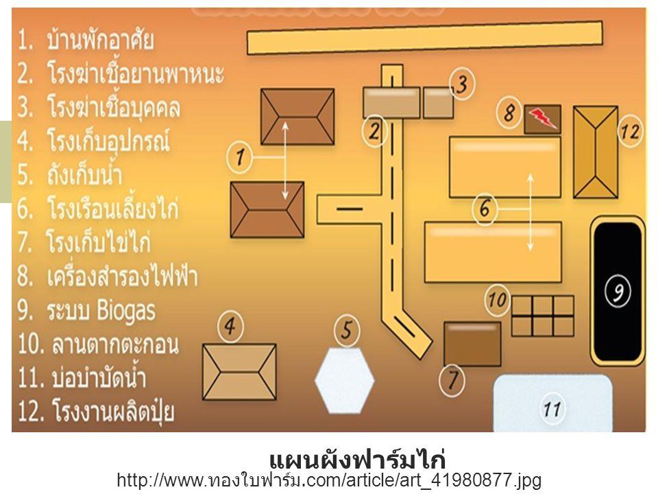 แผนผังฟาร์มไก่ http://www.ทองใบฟาร์ม.com/article/art_41980877.jpg
