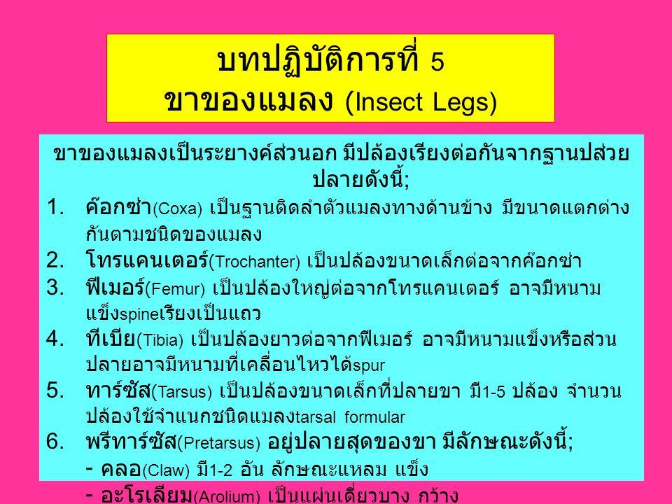 ขาของแมลง (Insect Legs)