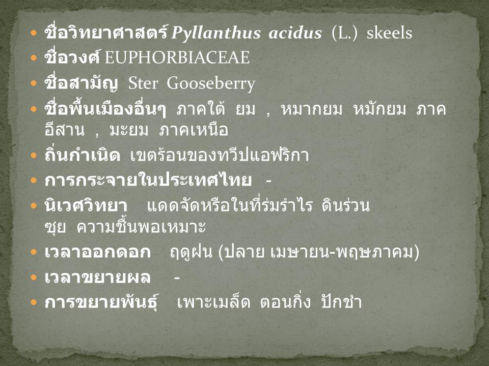 ชื่อวิทยาศาสตร์ Pyllanthus acidus (L.) skeels