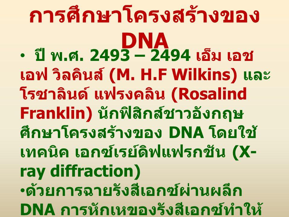 การศึกษาโครงสร้างของ DNA