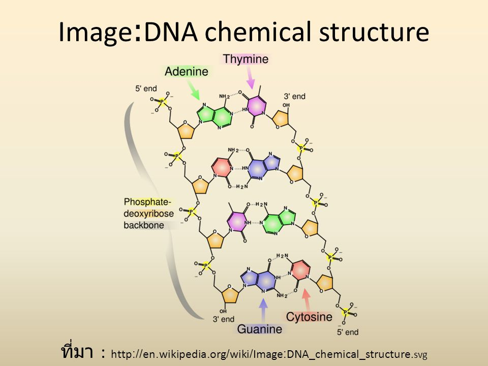 Image:DNA chemical structure