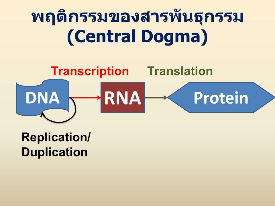พฤติกรรมของสารพันธุกรรม (Central Dogma)