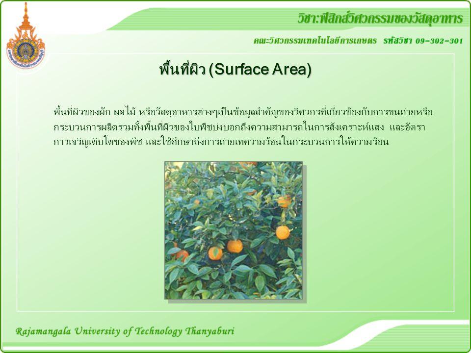 พื้นที่ผิว (Surface Area)