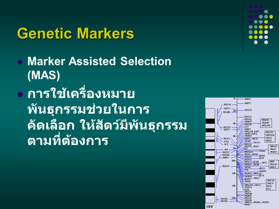 Genetic Markers Marker Assisted Selection (MAS) การใช้เครื่องหมายพันธุกรรมช่วยในการคัดเลือก ให้สัตว์มีพันธุกรรมตามที่ต้องการ.