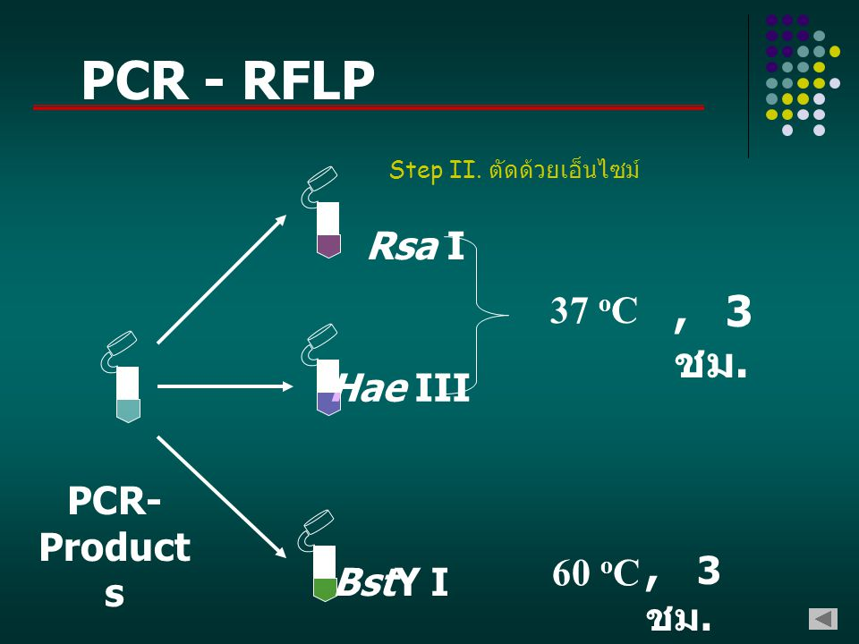 PCR - RFLP , 3 ชม. , 3 ชม. Rsa I 37 oC Hae III PCR-Products 60 oC