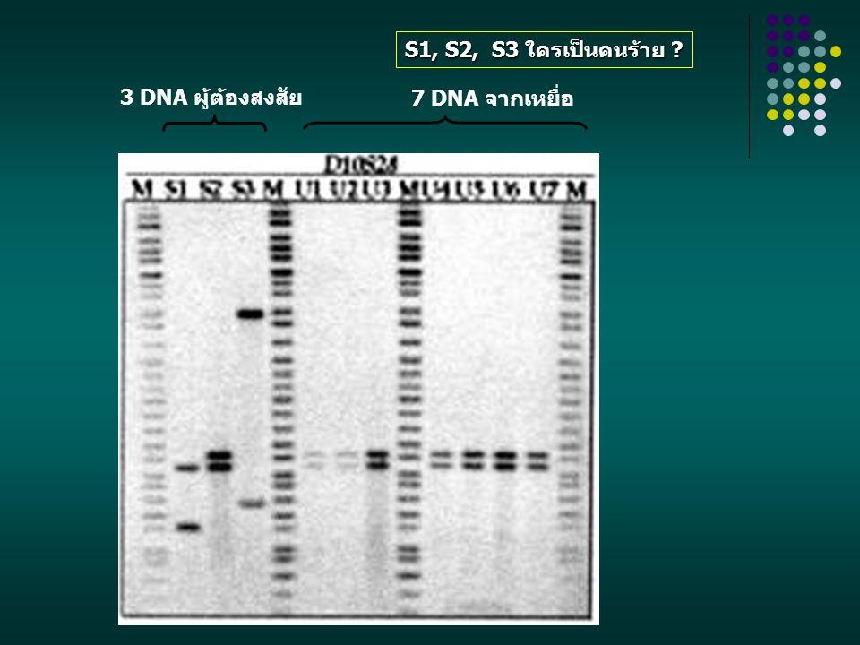 S1, S2, S3 ใครเป็นคนร้าย 7 DNA จากเหยื่อ 3 DNA ผู้ต้องสงสัย