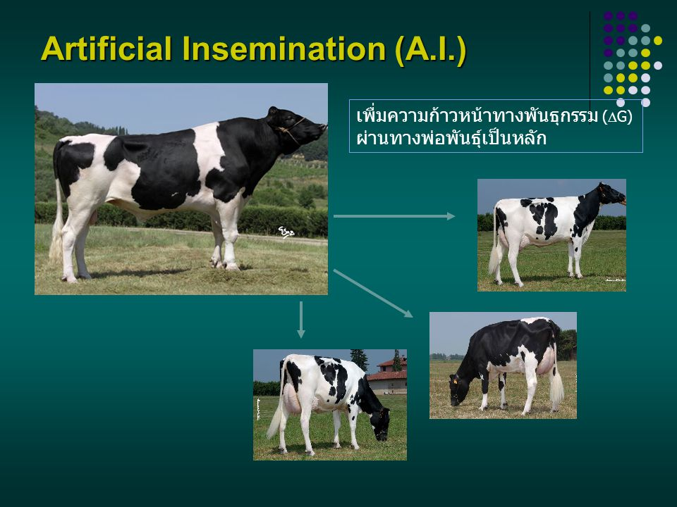 Artificial Insemination (A.I.)