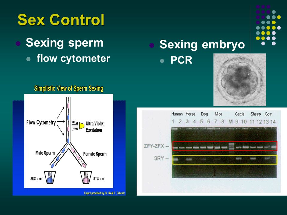 Sex Control Sexing sperm flow cytometer Sexing embryo PCR