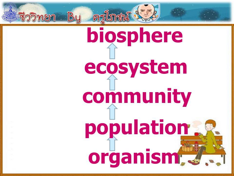 biosphere ecosystem community population organism