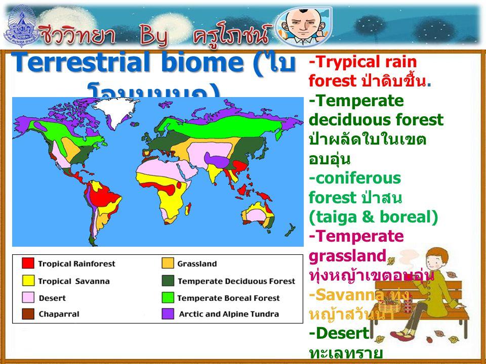 Terrestrial biome (ไบโอมบนบก)