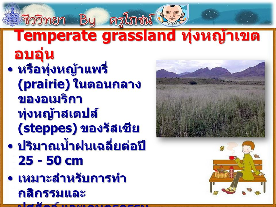 Temperate grassland ทุ่งหญ้าเขตอบอุ่น