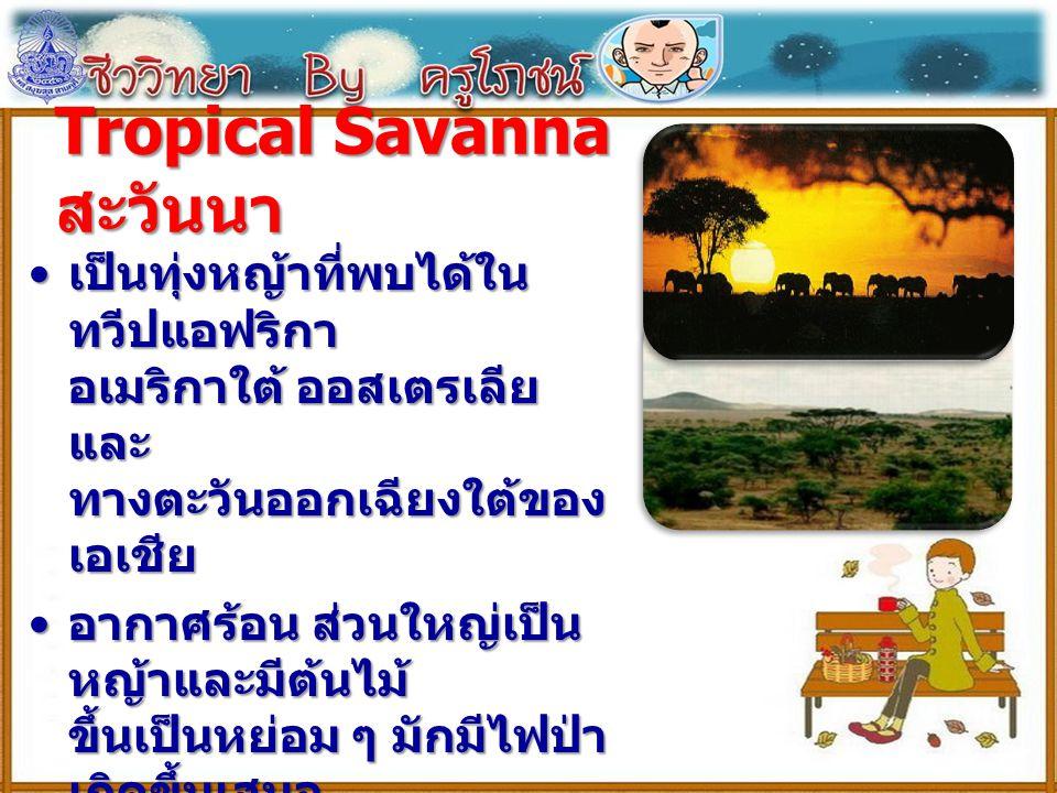 Tropical Savanna สะวันนา