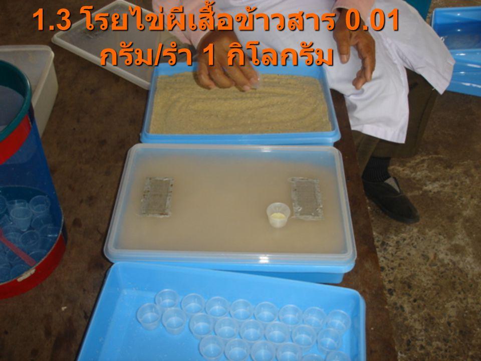 1.3 โรยไข่ผีเสื้อข้าวสาร 0.01 กรัม/รำ 1 กิโลกรัม