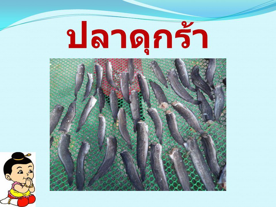 ปลาดุกร้า