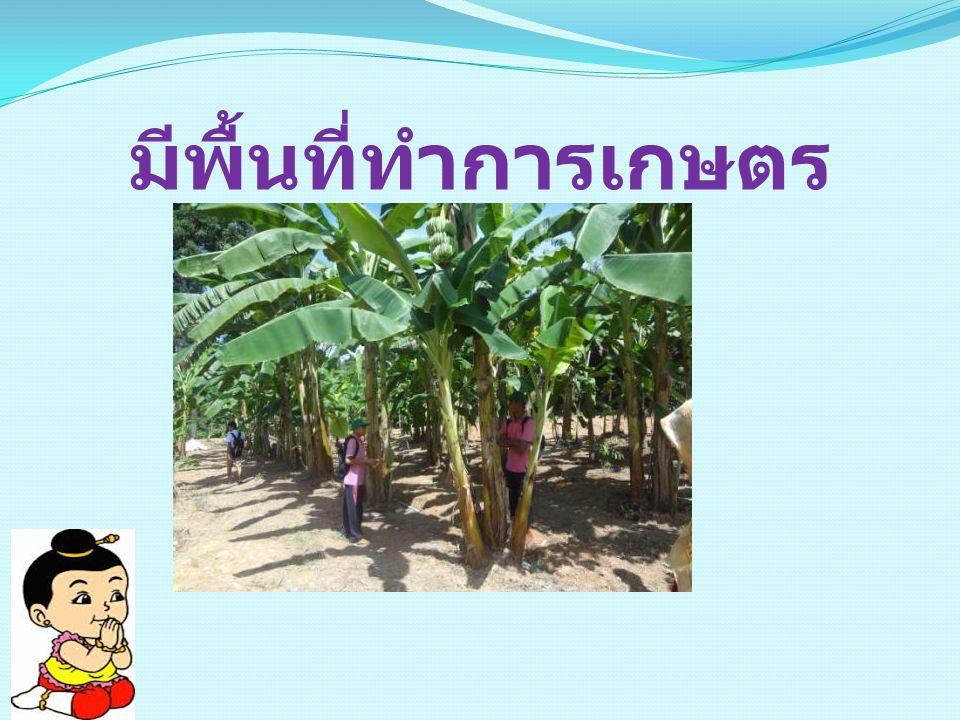 มีพื้นที่ทำการเกษตร