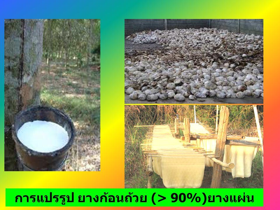การแปรรูป ยางก้อนถ้วย (> 90%)ยางแผ่น