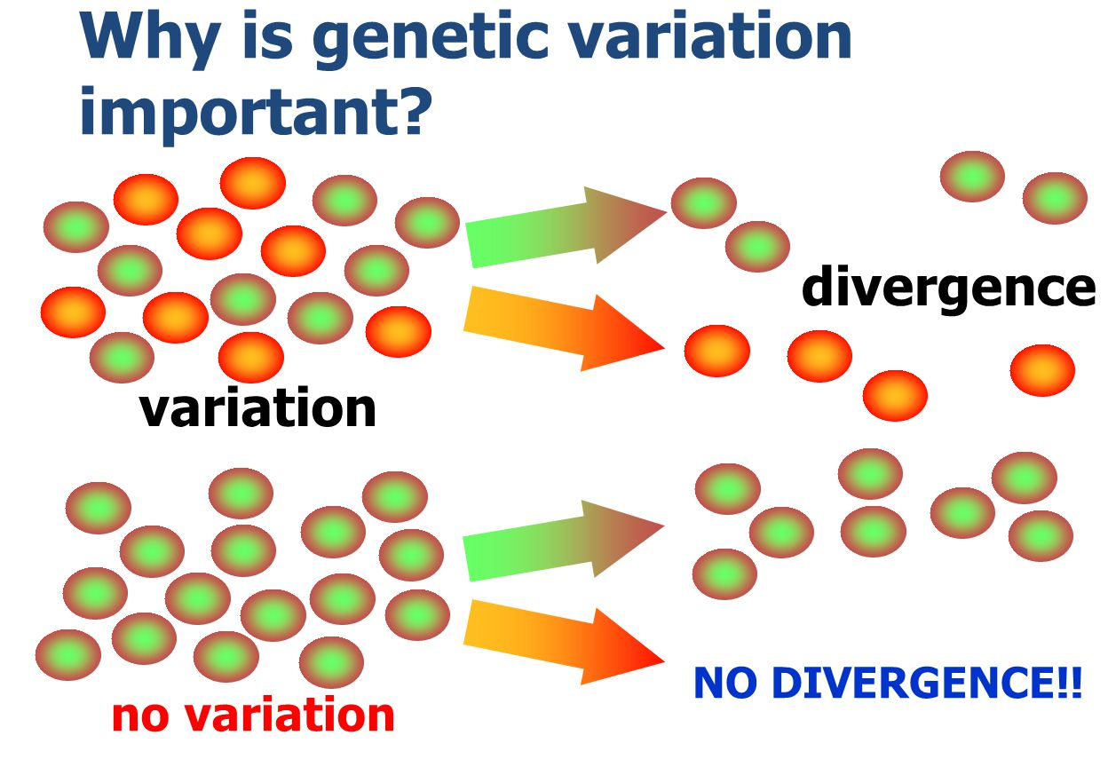 Why is genetic variation important