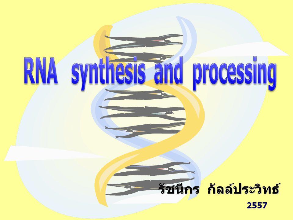 RNA synthesis and processing รัชนีกร กัลล์ประวิทธ์