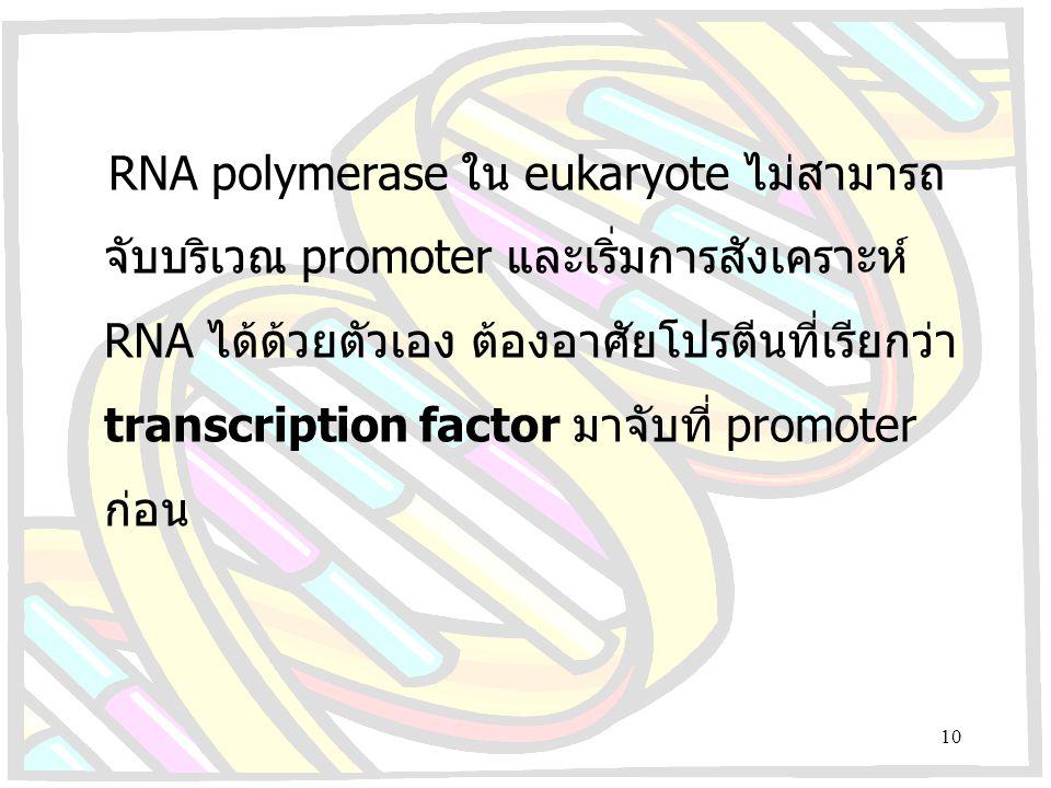 RNA polymerase ใน eukaryote ไม่สามารถจับบริเวณ promoter และเริ่มการสังเคราะห์ RNA ได้ด้วยตัวเอง ต้องอาศัยโปรตีนที่เรียกว่า transcription factor มาจับที่ promoter ก่อน