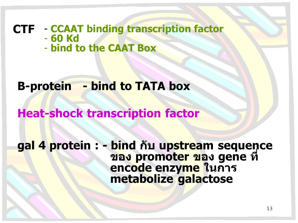 B-protein - bind to TATA box