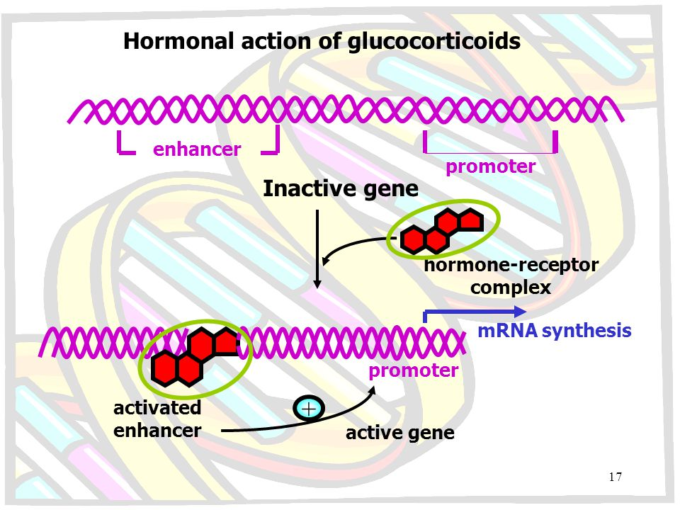 + Hormonal action of glucocorticoids Inactive gene enhancer promoter