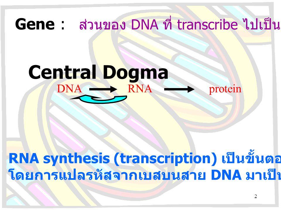 Gene : ส่วนของ DNA ที่ transcribe ไปเป็น RNA หรือ protein