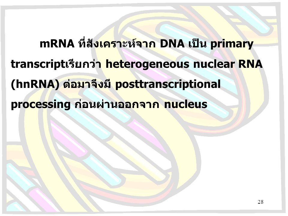 mRNA ที่สังเคราะห์จาก DNA เป็น primary transcriptเรียกว่า heterogeneous nuclear RNA (hnRNA) ต่อมาจึงมี posttranscriptional processing ก่อนผ่านออกจาก nucleus