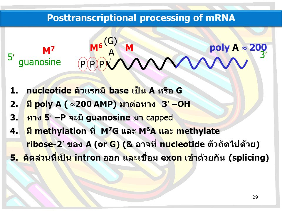 Posttranscriptional processing of mRNA