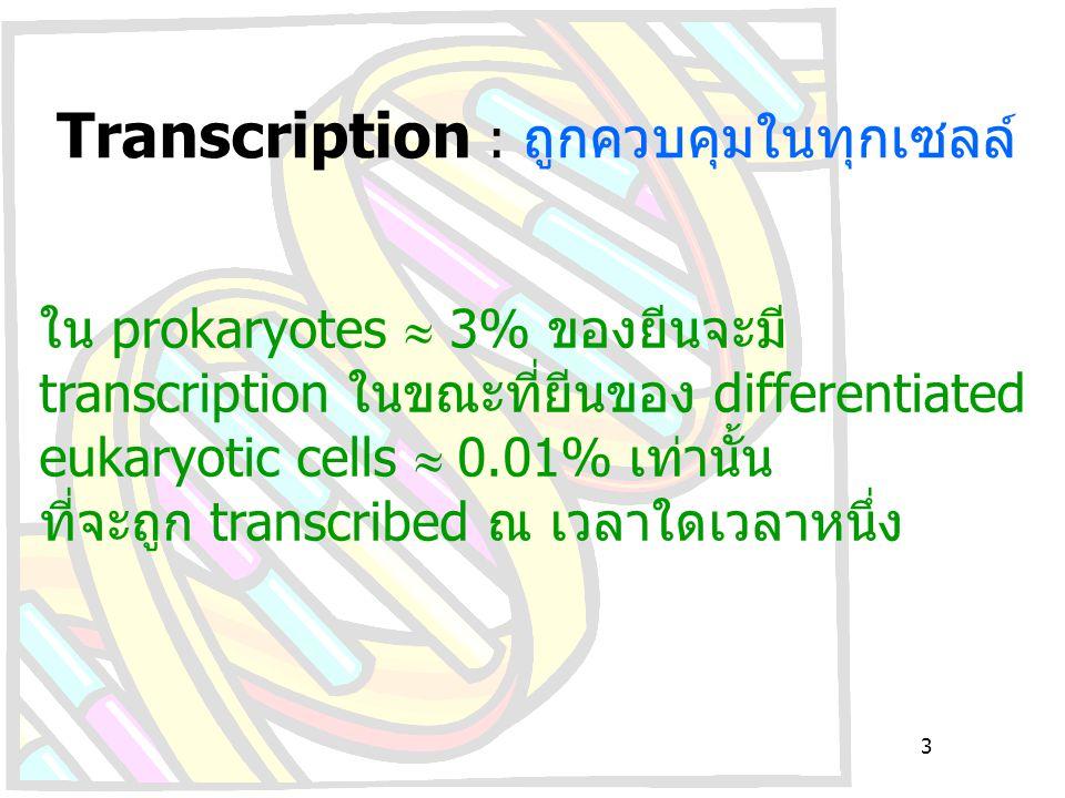 Transcription : ถูกควบคุมในทุกเซลล์