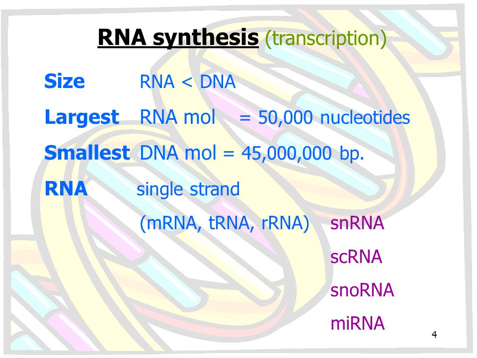 RNA synthesis (transcription)