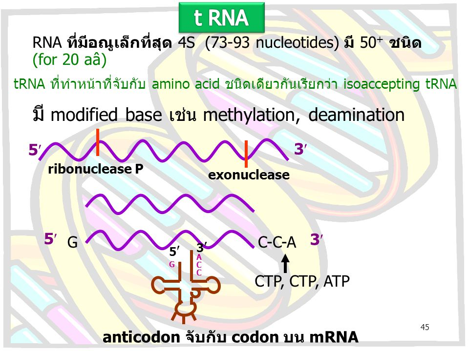 มี modified base เช่น methylation, deamination