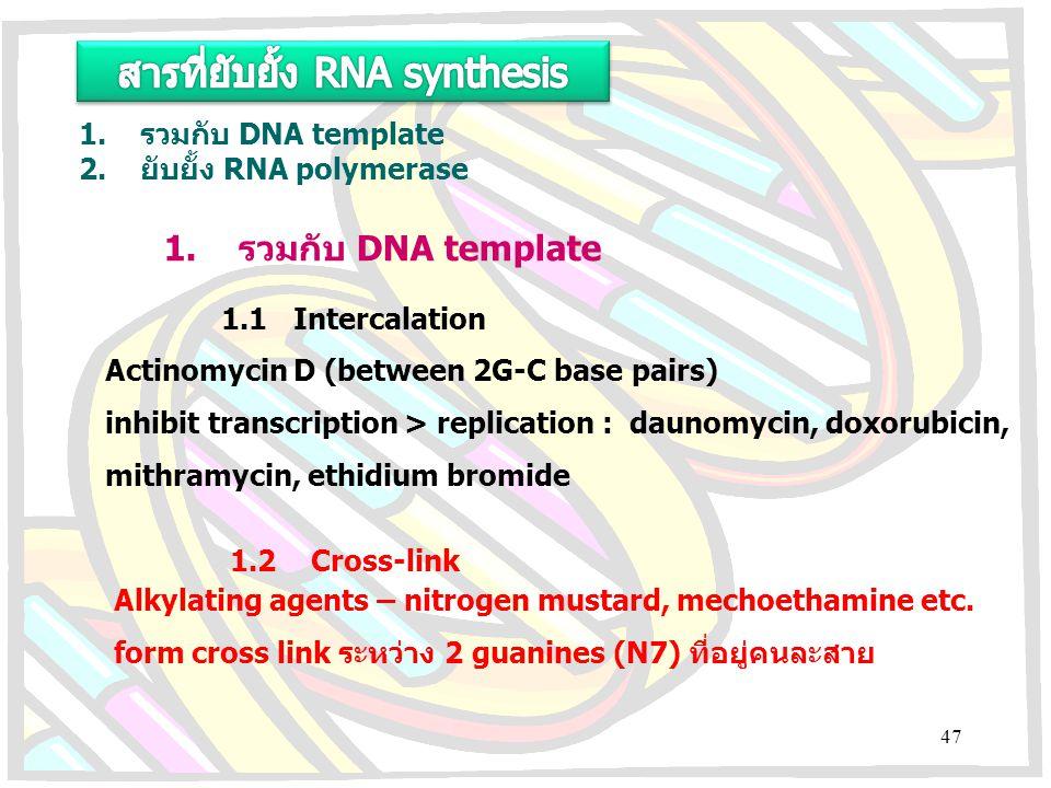 สารที่ยับยั้ง RNA synthesis