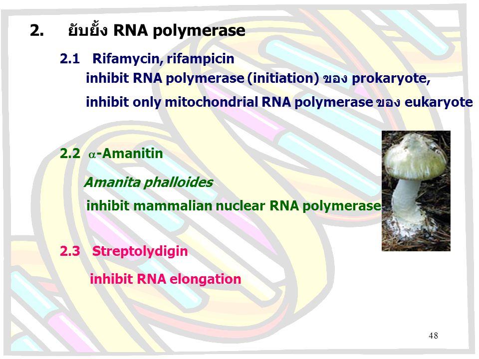 2. ยับยั้ง RNA polymerase