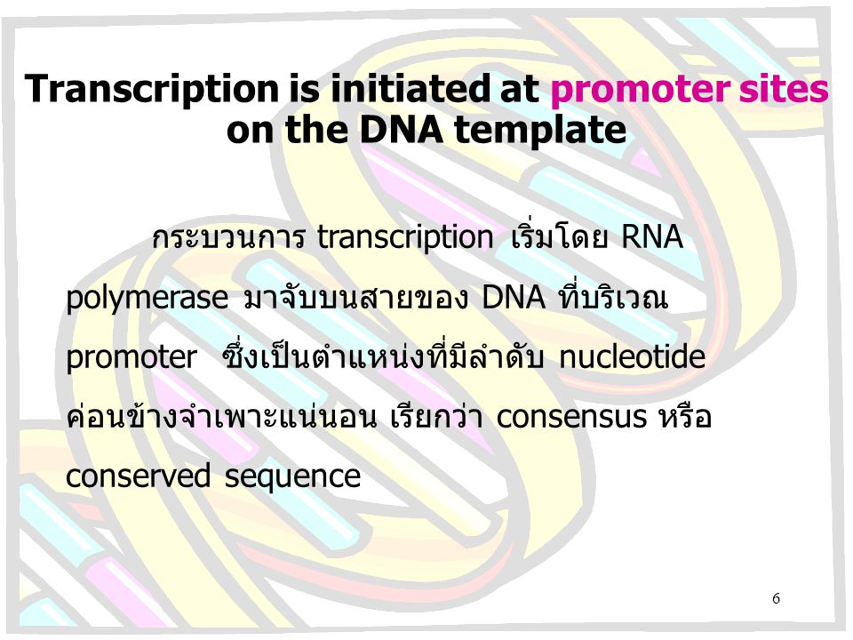 Transcription is initiated at promoter sites