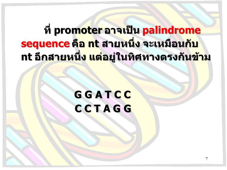 ที่ promoter อาจเป็น palindrome sequence คือ nt สายหนึ่ง จะเหมือนกับ nt อีกสายหนึ่ง แต่อยู่ในทิศทางตรงกันข้าม