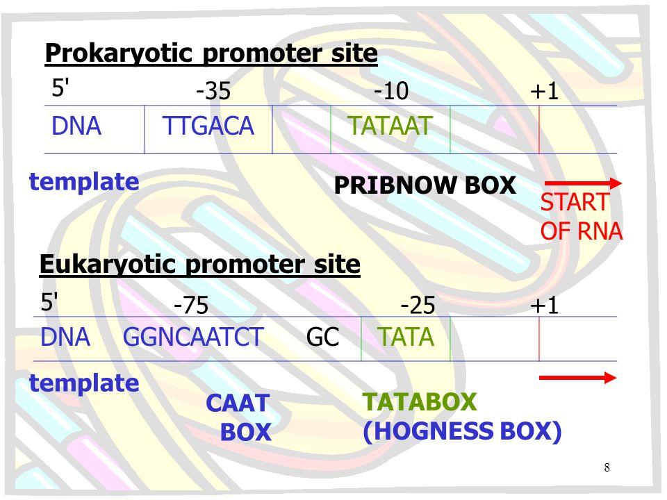 Prokaryotic promoter site DNA TTGACA TATAAT